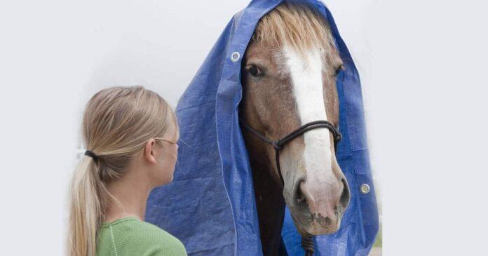 de-spook horse training. Habituation