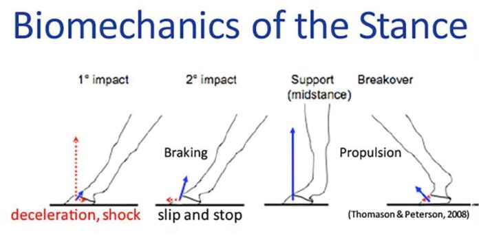 Phases of the stance. arena and racetrack surfaces