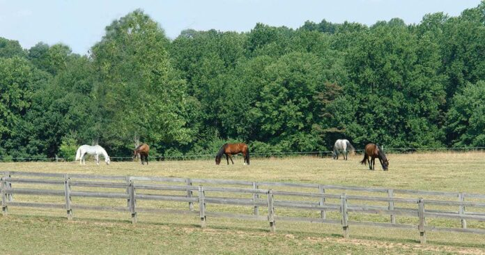 Horse owners need to be grass farmers. land management