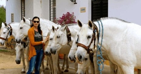 Horsing around the world Andalucia, spanish horses, PRE, Pura Raza Espanola