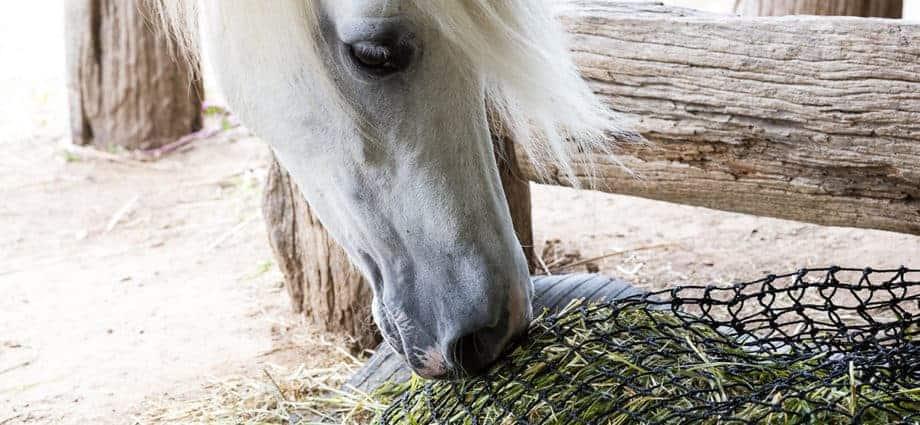 slow feeding hay net