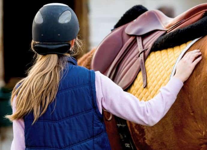 horse human interactions