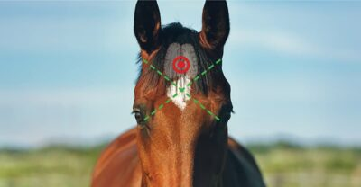 Horse Euthanasia Target. End-of-Life Options