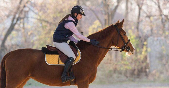 Rider on chestnut horse. Bias