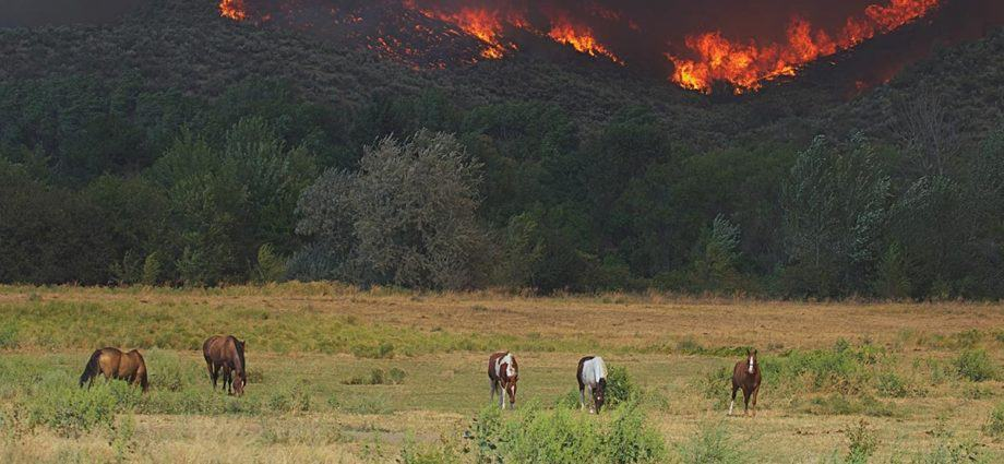 Horses in front of approaching bushfire. disaster resilience, emergency planning