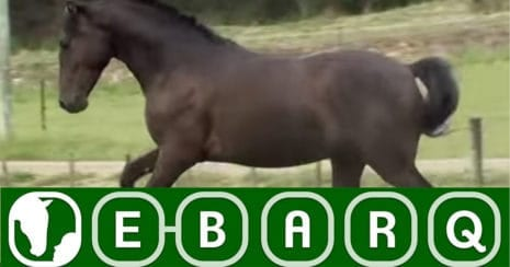 The Equine Behaviour Assessment and Research Questionnaire (E-BARQ)
