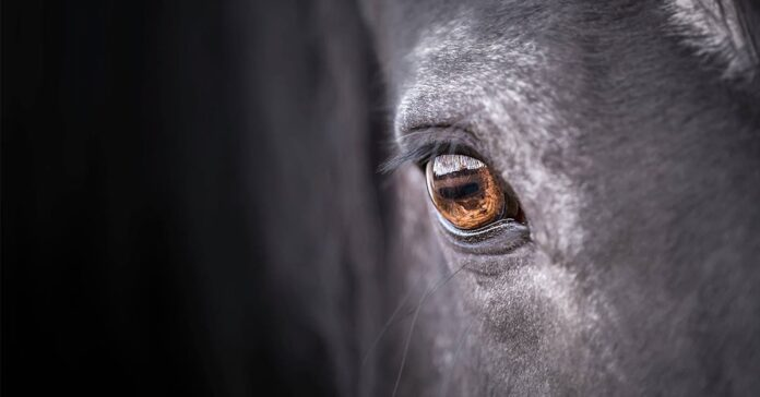 A horse will blink less and twitch its eyelids more when mildly stressed. eyelid twitches