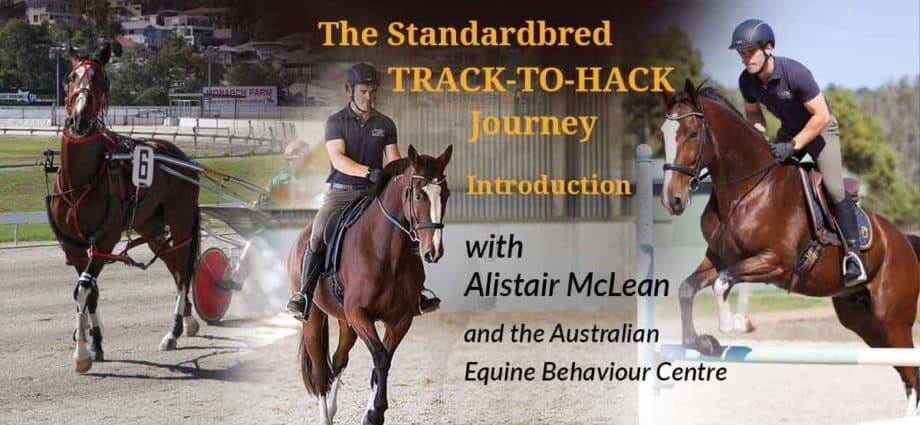 Track-to-Hack. A Standardbred track to hack journey, rehoming retraining the standardbred racehorse