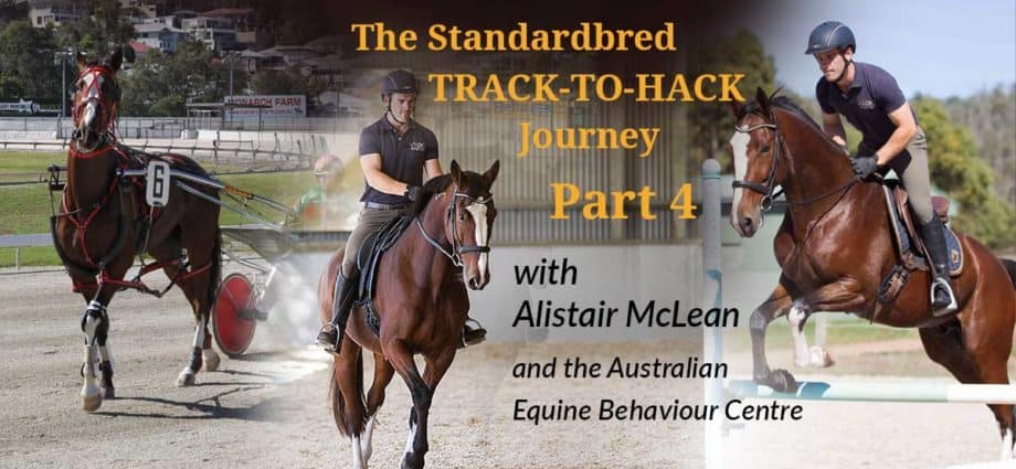 Alistair McLean of the Australian Equine Behaviour Centre with the retired Standardbred Ideal Guy, rehoming retraining the standardbred racehorse. Under Saddle