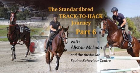 Alistair McLean of the Australian Equine Behaviour Centre with the retired Standardbred Ideal Guy, rehoming retraining the standardbred racehorse. Refining the Canter and Jumping