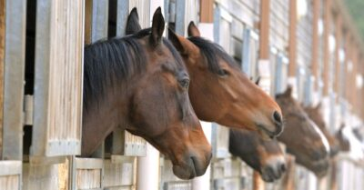 Horses are not meant to be confined to stables.