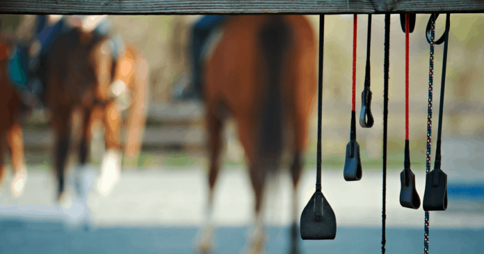 Whips hanging from a fence with horses in the background. Whip use in equestrian sport