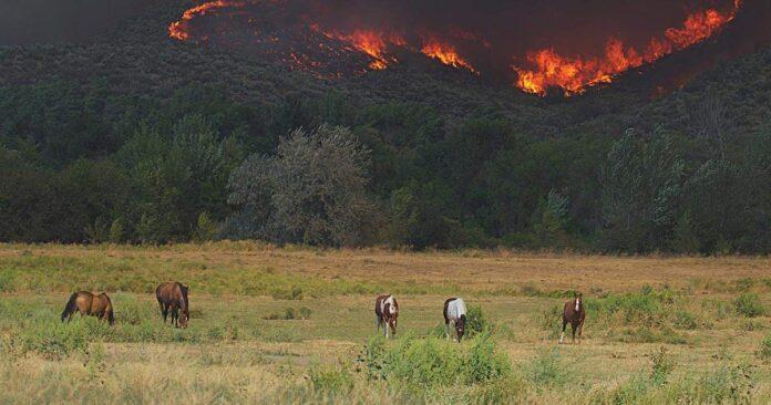Bushfires in the hills behind a herd of horses. Help for Australian bushfires