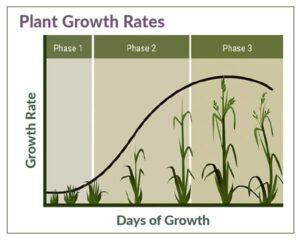 Table of Plant growth phases