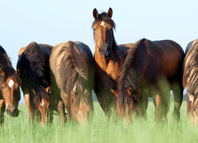 horses value friends, forage and freedom