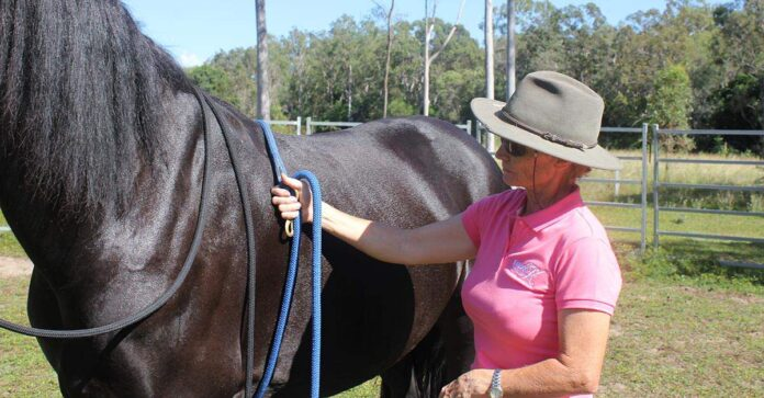 Kate Fenner with lead rope around the girth line of a black horse. First girth.