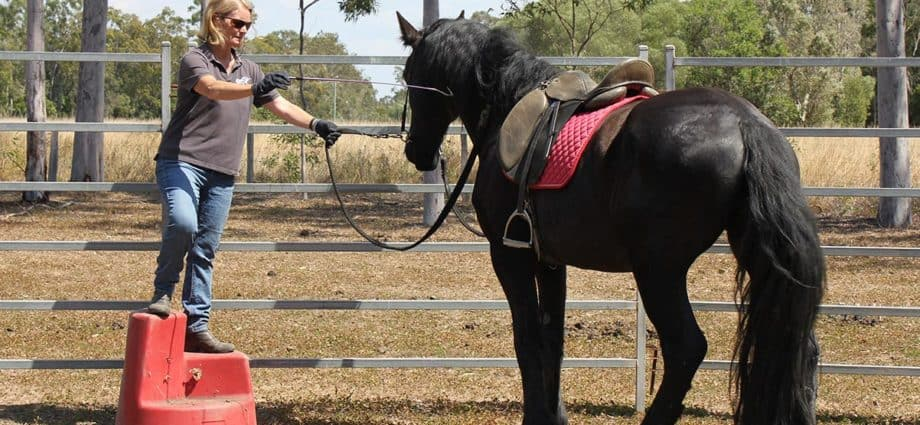 Kate Fenner training Friesian horse to stand near mounting block. Hips to the fence. Safe mounting.