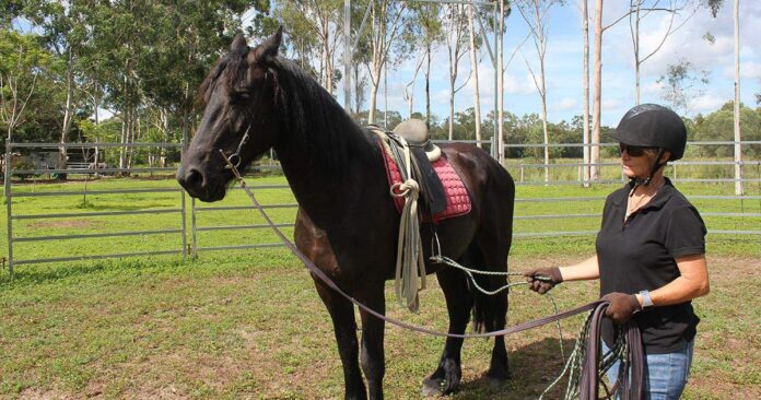 Kate Fenner with saddled Friesian horse. First saddle.