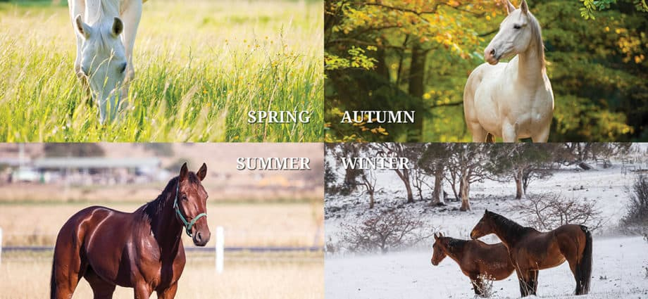 Horse management through the seasons. managing worms in horses.