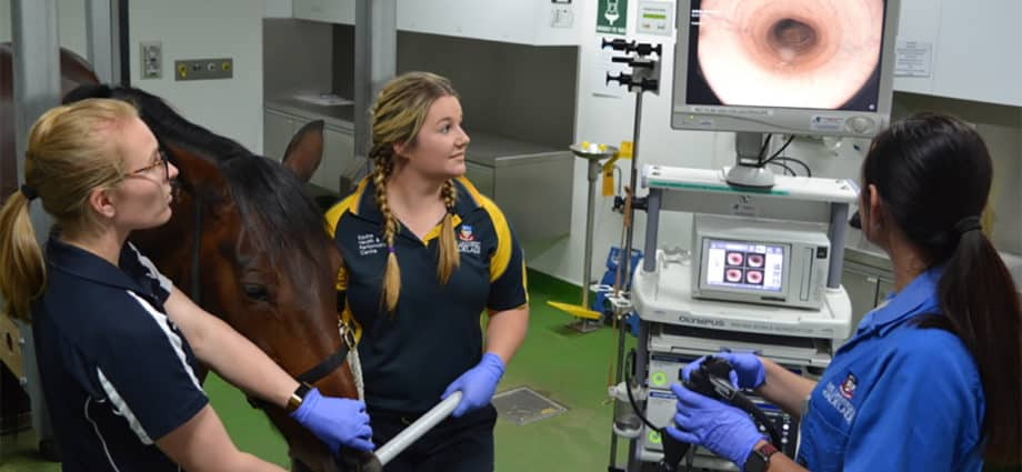 An endoscopic examination of a horse's airway