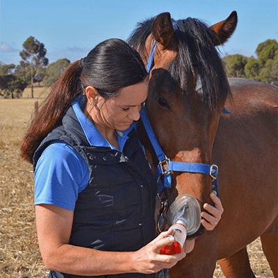 Treating a horse with inhaled medication
