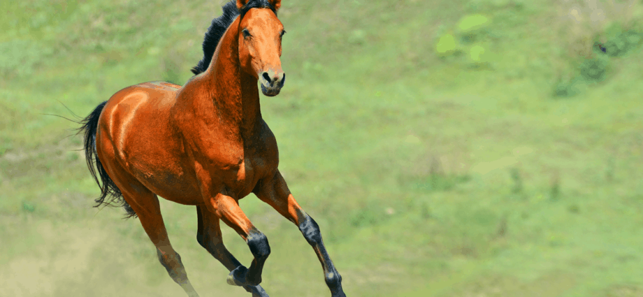 Horse traceability is important for welfare