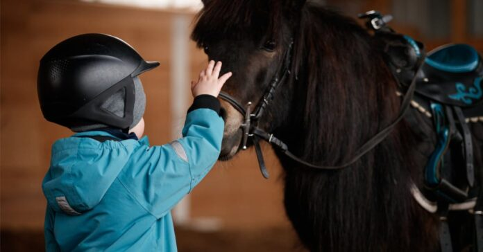 small horse rider meets his equine partner. Therapy horses