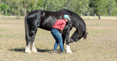 Target training - woman using clicker training to train stretches with black horse. Neck Stretch