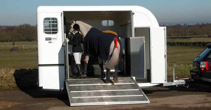 Researchers say horses travel better in wider bays and probably facing backwards. Photo courtesy EquiTrek Australia