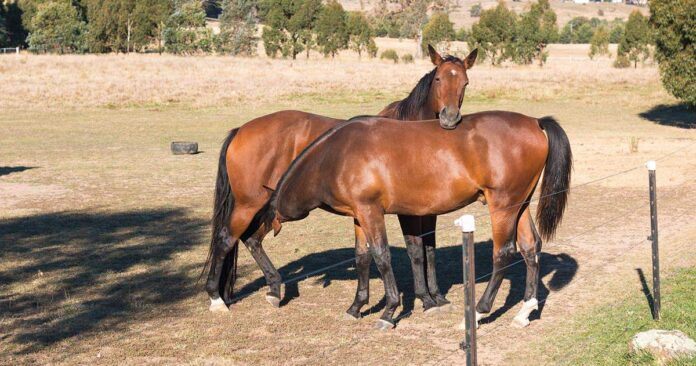 Weaning strategy. When is the best time to wean? Mare nursing adult offspring.