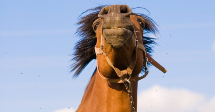 Horse with head raised. Is your horse in the mood to learn? Scientists say training has to adjust to your horse's emotional states