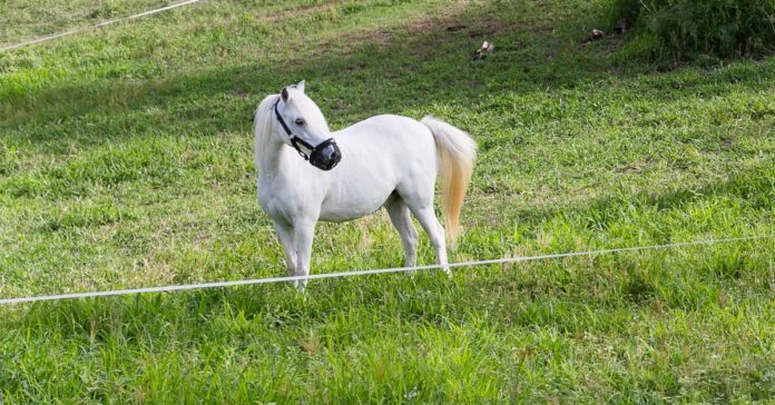 7 tips for reducing weight gain in horses and ponies