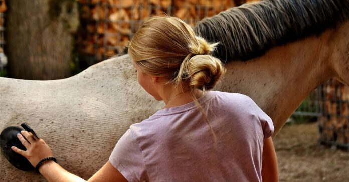 Researchers around the world have teamed up to determine the impact of the COVID-19 pandemic on horse owners and their animals.