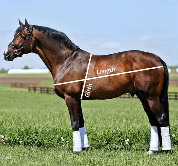 horse weight calculator measurement diagram