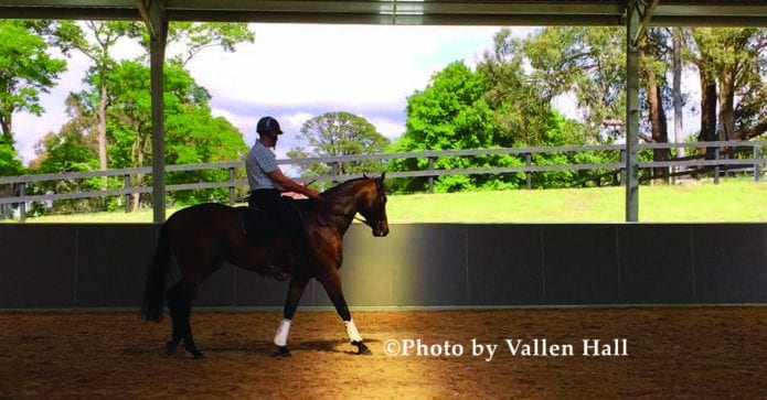 Equus Nexus giving Thoroughbreds the best chance for life
