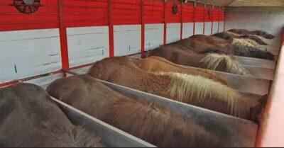 Horse transport World Horse Welfare