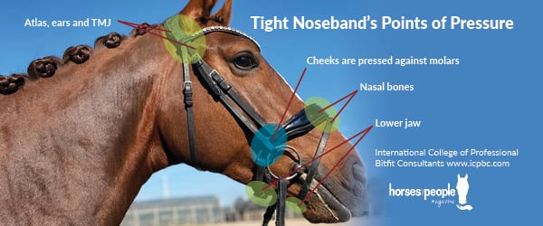Tight nosebands points of pressure