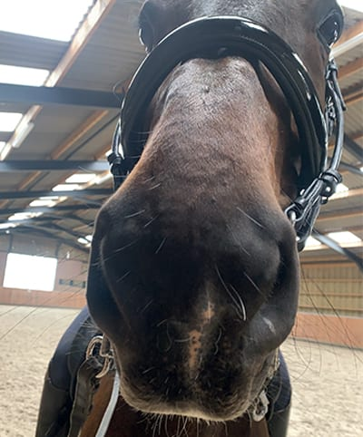 There should be space all around the noseband