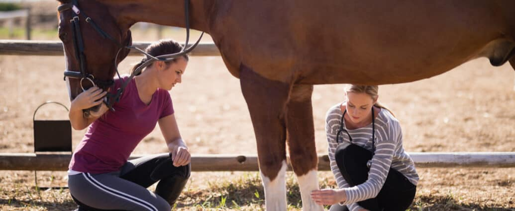 Top reasons why you should vet check the next horse you buy