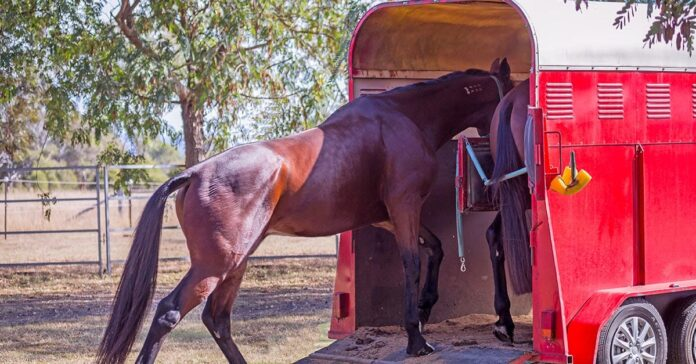 Protect your horse during travel