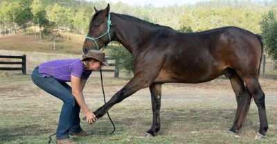 3 benefitial stretches and core strengthening for your horse