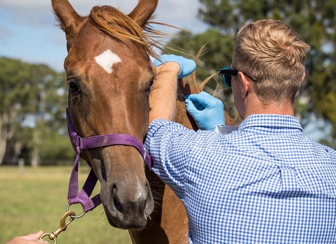 vet curriculum incorporates how horses learn
