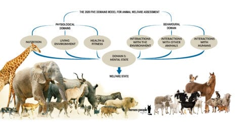 A new, updated version of the Five Domains Model, the gold standard in animal welfare assessment and monitoring, has just been published in the Open Access journal Animals.