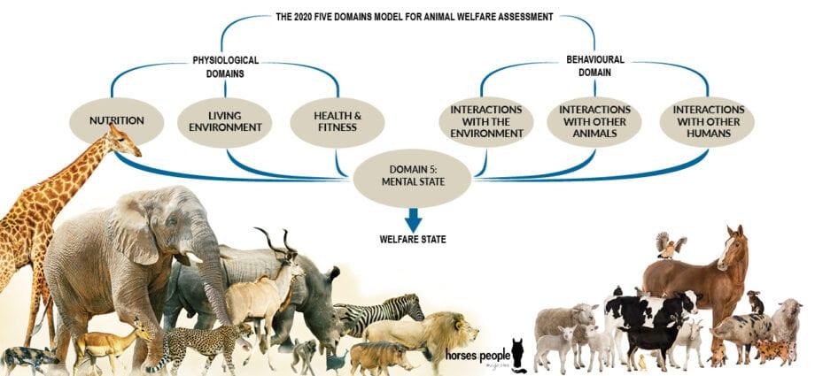 Five Domains Model of Welfare
