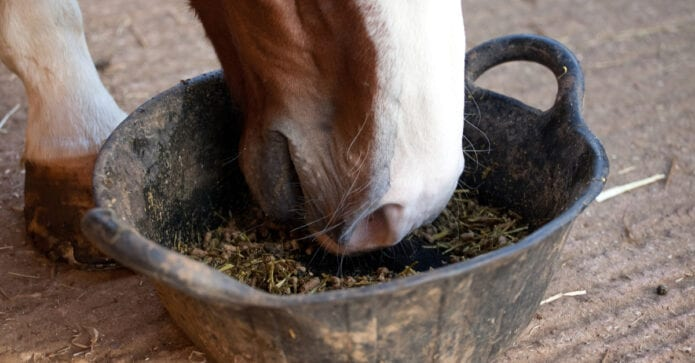 Probiotics for horses. Do they work?