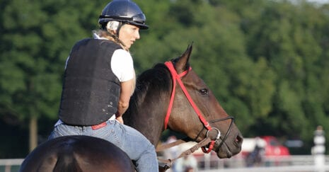 retraining off the track thoroughbreds