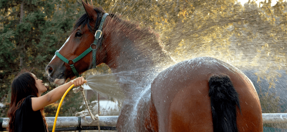 How to cool a hot horse - as recommended by the FEI