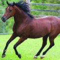 Five steps to prevent back pain in your horse