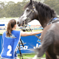 Naturalness and the Legitimacy of Thoroughbred Racing: A Photo-Elicitation Study with Industry and Animal Advocacy Informants