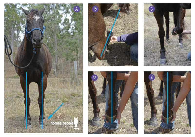 Series of images to show that on this particular horse, the evident 'pigeon toe' may actually be a compensation pattern that could be improved.